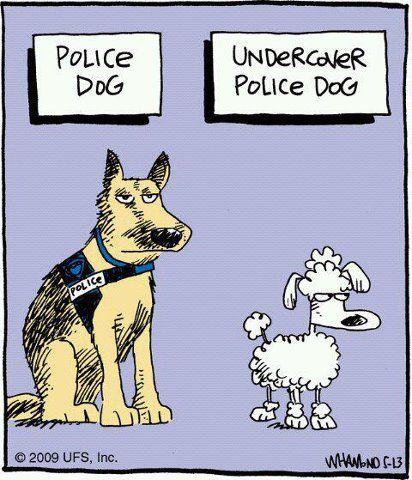 undercover, undercover cops, entrapment
